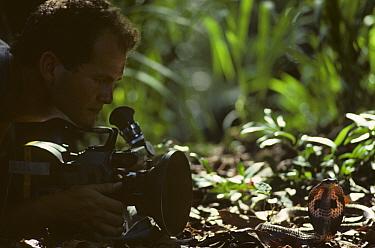 Simon King filming Cobra (Naja sp)  -  Simon King/ npl