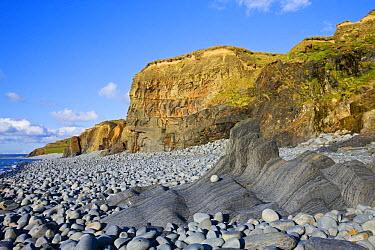 Coast, cliffs and pepple beach at Abbotsham, North Devon, UK, showing rock striations and coastal geology  -  Adam Burton/ npl