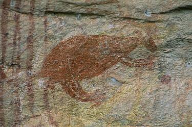 Aboriginal rock art, kangaroo, Nr Darwin, Northern Territory, Australia  -  Owen Newman/ npl