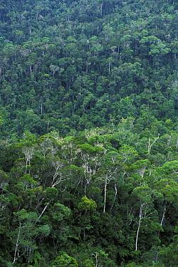 Maromizahara Rainforest, Madagascar  -  Jouan & Rius/ npl