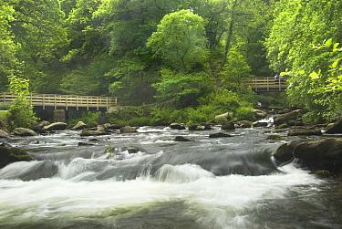 Watersmeet, junction of Moorland streams and East Lyn River, Exmoor national park, UK, May  -  Gary K. Smith/ npl