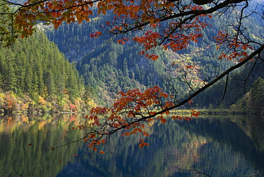 Lake and trees, Juizhaigou National Reserve, UNESCO world heritage site, Sichuan, China October 06 'Wild China' series  -  Gavin Maxwell/ npl