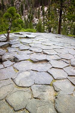 Devils Postpile rock formation, eastern-California, USA  -  Adrian Davies/ npl