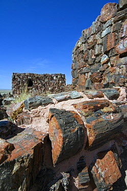 Agate House, an Indian pueblo (community) built with petrified wood Petrified Forest National Park, Arizona, USA 2007  -  Philippe Clement/ npl