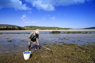 Man hoeing the mudflats in Ria de Corme y Laxe Estuary, Costa da Morte, Galicia, Spain  -  Jose B. Ruiz/ npl