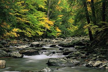 Bash Bish brook flowing through a rocky wooded gorge in Massachusetts, USA  -  Adam Burton/ npl