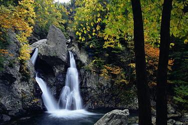 Bash Bish falls in autumnal forest, Massachusetts, USA  -  Adam Burton/ npl