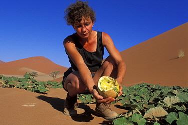 Watermelon (Citrullus lanatus) held by woman that has been partially eaten by an animal, Namib Naukluft National Park, Namib desert, Namibia  -  Jouan & Rius/ npl