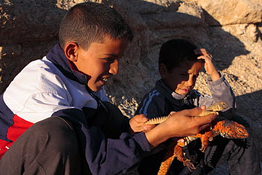 Spiny Tail Lizard (Uromastyx acanthinurus) held by boy in the High Atlas Mountains, Morocco  -  Juan Manuel Borrero/ npl
