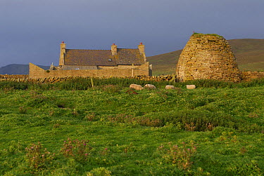 Gungstie farm on Noss Island, Shetland Islands, Scotland, UK  -  Jouan & Rius/ npl