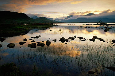 Highlands landscape, Scotland, UK  -  Tim Martin/ npl