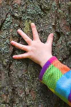 Child's hand feeling Pine bark, UK  -  Niall Benvie/ npl