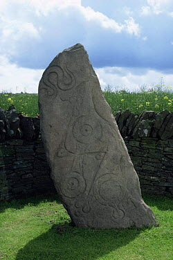 Carved pictish stone Angus, Scotland  -  Niall Benvie/ npl