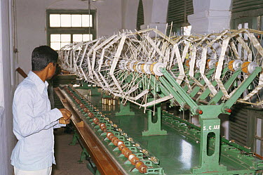 Khadi and Village Industries Commission (KVIC) production of silk from Silkworm moth (Bombyx mori) Mahabaleshwar, Andhra Pradesh, India  -  John B Free/ npl
