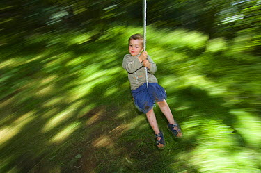 Young boy swinging through the forest, Letham, Fife, Scotland, UK, July  -  Niall Benvie/ npl