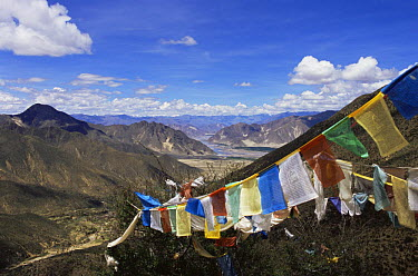 Prayer Flags at the Xiongse nunnery, Tibet 2007  -  Gavin Maxwell/ npl
