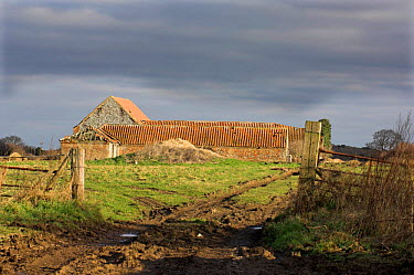 Derelict barn, typical of type used for redevelopment, Norfolk, UK  -  Gary K. Smith/ npl