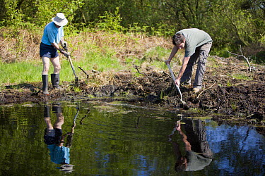 Conservation volunteers damming up an acid pool on a raised bog in woodland, Heysham Moss reserve, Lancashire, UK  -  Jason Smalley/ npl