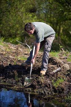 Conservation volunteer damming up an acid pool on a raised bog in woodland, Heysham Moss reserve, Lancashire, UK  -  Jason Smalley/ npl