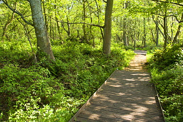 Woodchip path through a woodland, Heysham Moss Reserve, Lancashire, UK  -  Jason Smalley/ npl