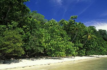 Beach on Walea island, Toigan islands, Sulawesi, Indonesia  -  Roberto Rinaldi/ npl