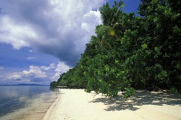 Deserted tropical beach close to Walea resort on the Togian Islands, Sulawesi  -  Roberto Rinaldi/ npl