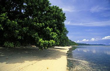 Deserted beach, Walea island, Toigan islands, Sulawesi, Indonesia  -  Roberto Rinaldi/ npl