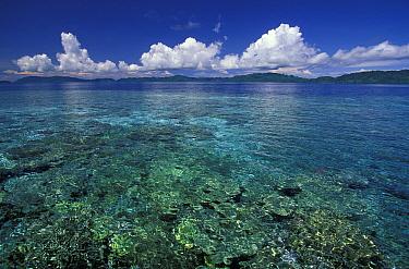 Coral reef in clear water, Walea, Togian Islands, Sulawesi  -  Roberto Rinaldi/ npl