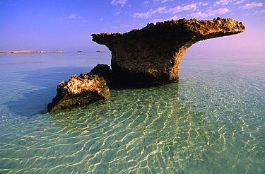 Abu Latt Island, Farasan Islands, Saudi Arabia  -  Roberto Rinaldi/ npl