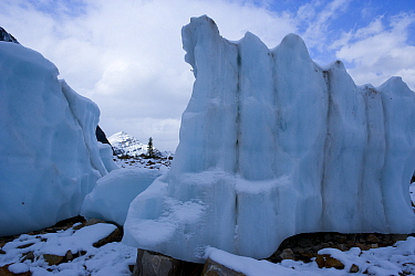 Cavell glacier, Jasper, Rocky Mountains NP, Alberta, Canada  -  Juan Carlos Munoz/ npl