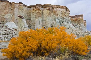 White Hoodoos, Staircase-Escalante National Monument, Arizona, USA  -  Juan Carlos Munoz/ npl