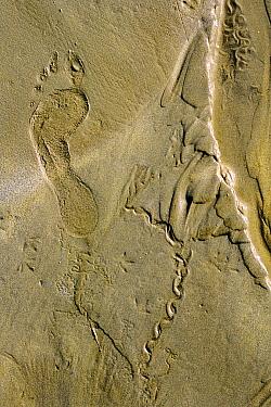 Human footprint, and tracks of bird and worm activity in sand  -  Marc Robillard/ npl