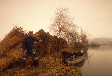 Reed cutter Eric Edwards, the last working marshman left in the area, Norfolk Broads, UK Eric gathers reeds and sedge for local thatchers or to make panels 1990  -  Gary John Norman/ npl