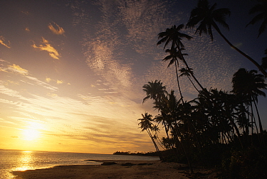 Sunset on a tropical beach on the west coast of Barbados, Caribbean, 1993  -  Gary John Norman/ npl