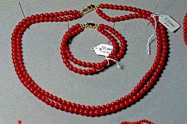 Red coral (corallium rubrium) necklace and bracelet for sale in a shop in Elba The coral is a natural gem that is harvested from Elba's own coral reef, Italy  -  Angelo Giampiccolo/ npl