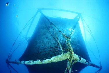 Aquaculture equipment, Marina di Camerota, Campania, Italy  -  Angelo Giampiccolo/ npl