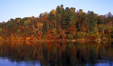 Riparian or gallery forest of Japanese elms (Ulmus davidiana var japonica), Manchurian ash (Fraxinus mandshuric?) and Korean Pine trees (Pinus koraiensis) along the Bikin River, the Northern Ussurilan...  -  Konstantin Mikhailov/ npl