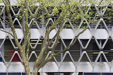 Plane tree and multi-storey car park, Bristol, UK  -  Michael Hutchinson/ npl