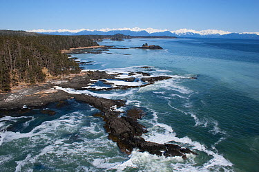 Aerial view of coastline near Sitka, sea covered in Pacific herring (Clupea pallasii) spawn, South East Alaska, USA, March 2007  -  Hugh Pearson/ npl