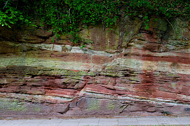 A normal fault in Triassic Sandstone, Wirral, UK, May 2009  -  Graham Eaton/ npl