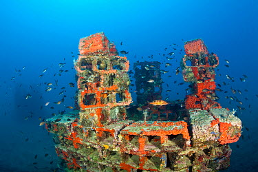 One of the deeper artificial reefs surraunded by Damselfish (Chromis chromis) with a Comber (Serranus cabrilla) in the middle, Larvotto Marine Reserve, Monaco, Mediterranean Sea, July 2009  -  WWE/ Banfi/ npl