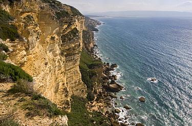 Sea cliffs at Barbate (Parque natural del Acantilado y Pinar de Barbate) Andalusia, Spain March 2007  -  Angelo Gandolfi/ npl