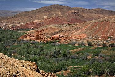 Dades Valley, Atlas mountains, Morocco, March 2008  -  Angelo Gandolfi/ npl