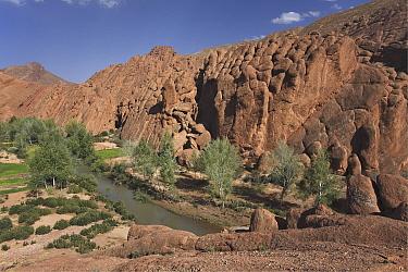 Monkey Finger Rocks in Dades gorge, Atlas mountains, Morocco, March 2008  -  Angelo Gandolfi/ npl