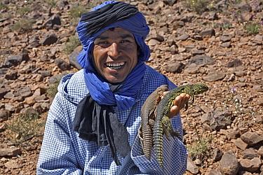 Bedouin man with two Moroccan Spiny-tailed Lizards (Uromastyx acanthinurus), Morocco, Sahara March 2007  -  Angelo Gandolfi/ npl
