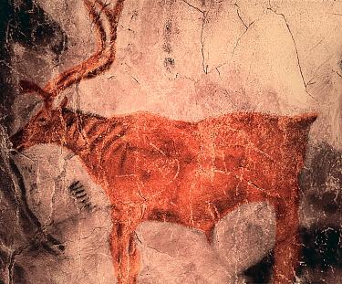 Prehistoric rock painting of Reindeer in Tito Bustillo cave, Asturias, Spain July 2008  -  Angelo Gandolfi/ npl