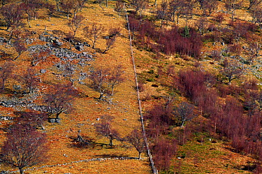Aerial view of section of hillside at Strath Dearn, The Findhorn Valley showing grazing pressure to the left side of the image which is unfenced Inverness-shire, Scotland, March  -  Laurie Campbell/ npl