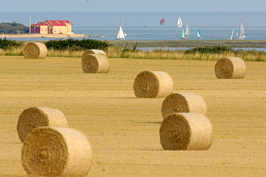 Round straw bales with tidal estuary, lifeboat station and pleasure boats in distance, Wells, Norfolk, UK, August  -  Gary K. Smith/ npl