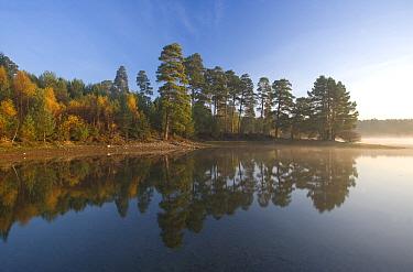 Loch Vaa at dawn, Cairngorms National Park, Scotland, October 2007  -  Pete Cairns/ npl