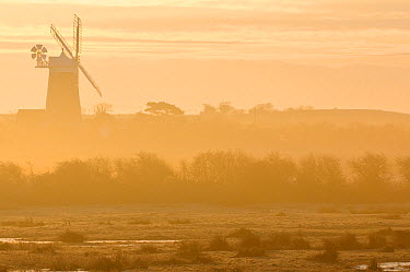 Grazing marshes at Holkham National Nature Reserve, looking towards Burnham Overy Mill, at dawn, Norfolk, UK, March 2009  -  Chris Gomersall/ npl